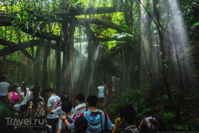 Китай, Шэньчжэнь: Вечнозеленый парк (Evergreen park) / Фото из Китая