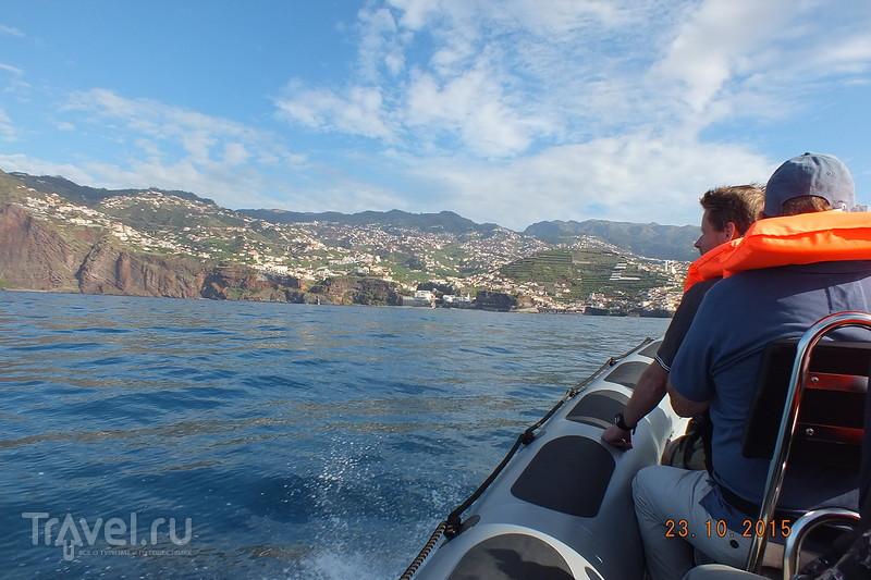 Португалия. Мадейра. Дельфины / Португалия