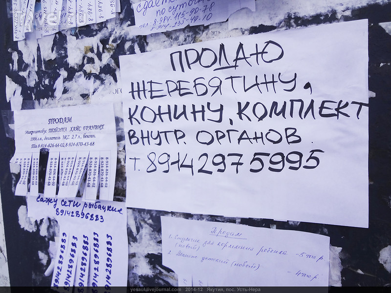 Ещё с Индигирки, из прошлого декабря / Россия