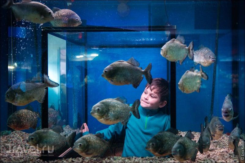 Параллельный мир в московском подвале - Океанариум на Чистых прудах / Фото из России