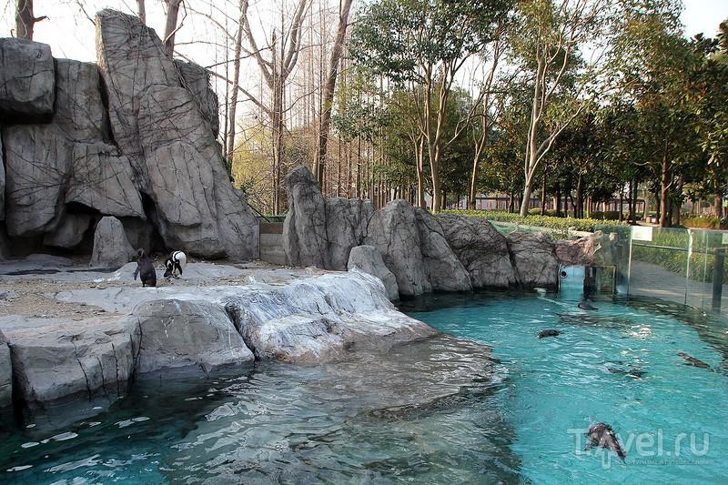 Шанхай. Wild Animal Park / Фото из Китая