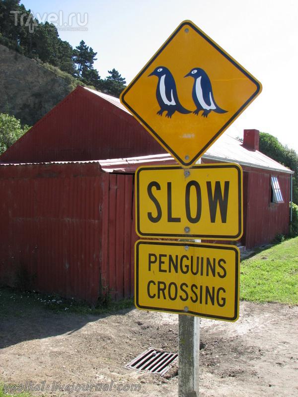 В стране антиподов. Голубые пингвины Оамару / Новая Зеландия