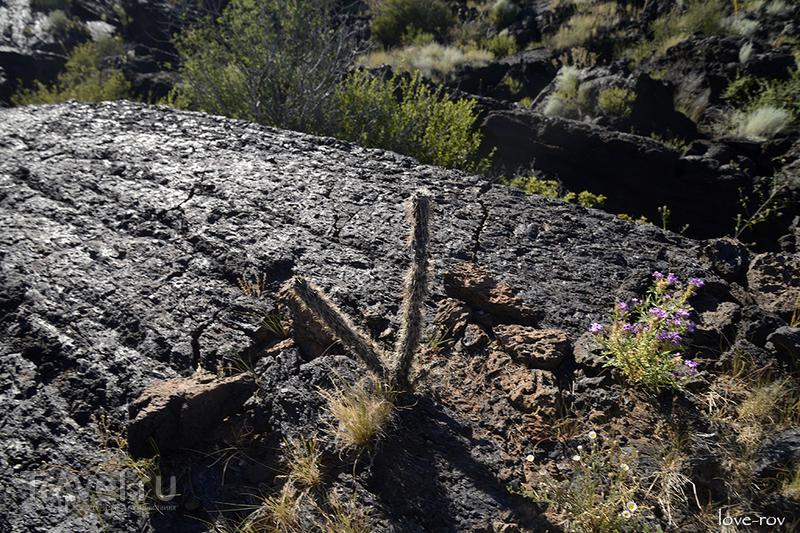 Нью-Мексико и Аризона / США