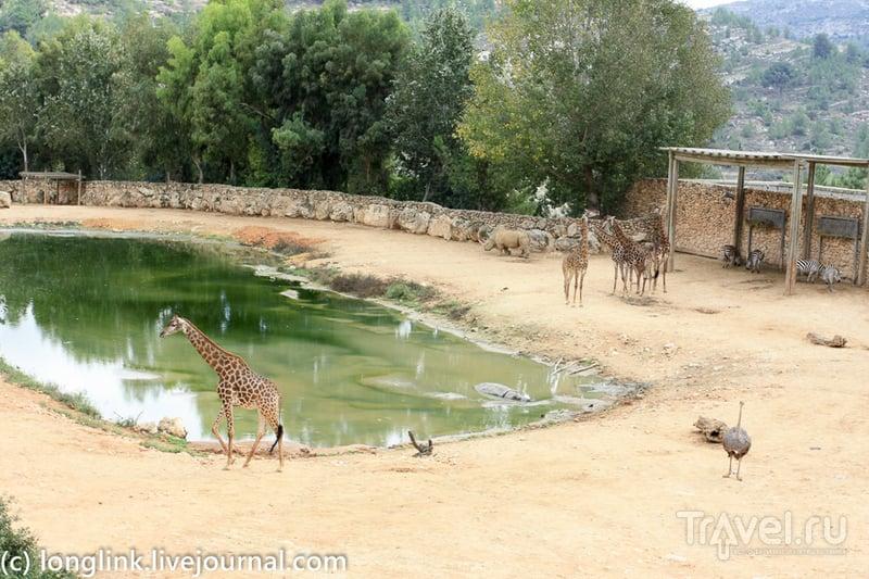 Библейский зоопарк в Иерусалиме / Израиль