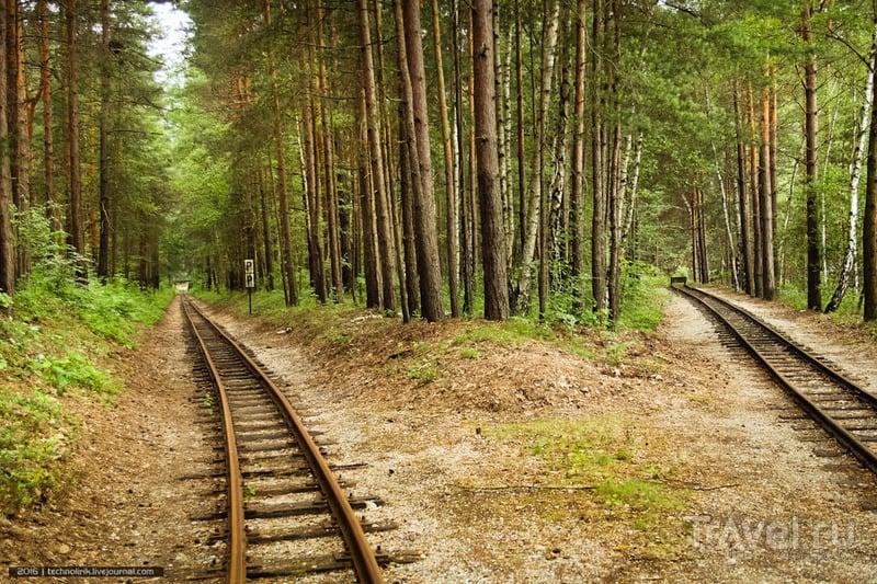 Прогулка вдоль заброшенной ветки лесной узкоколейки / Фото из Германии