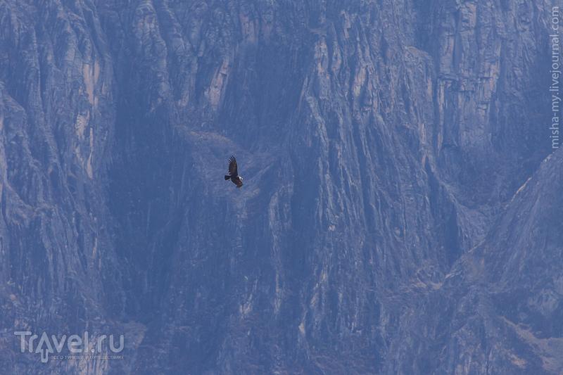 Поездка по Перу. Кондоры / Фото из Перу