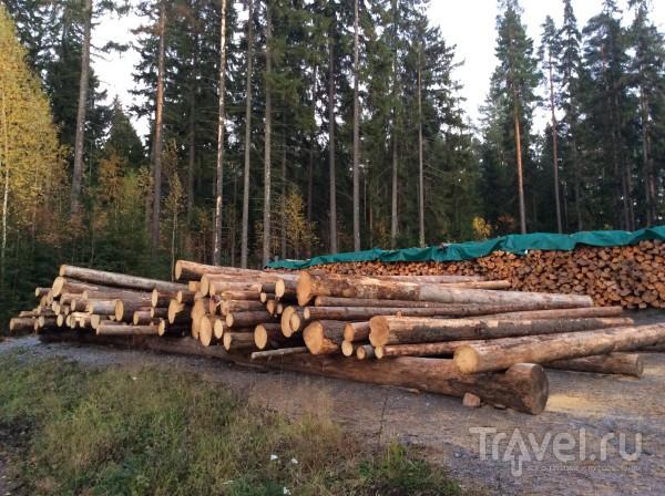 Мои ТОП-3 сауны в Финляндии / Финляндия