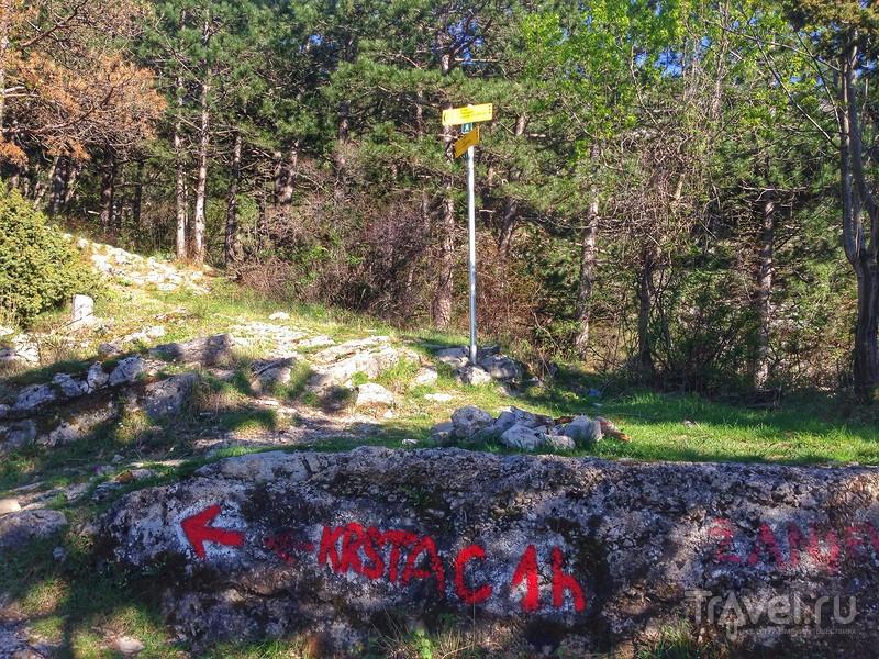 Подъем из Котора в Негуши по старой тропинке / Фото из Черногории