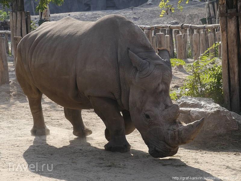 Один из лучших зоопарков Европы / Венгрия