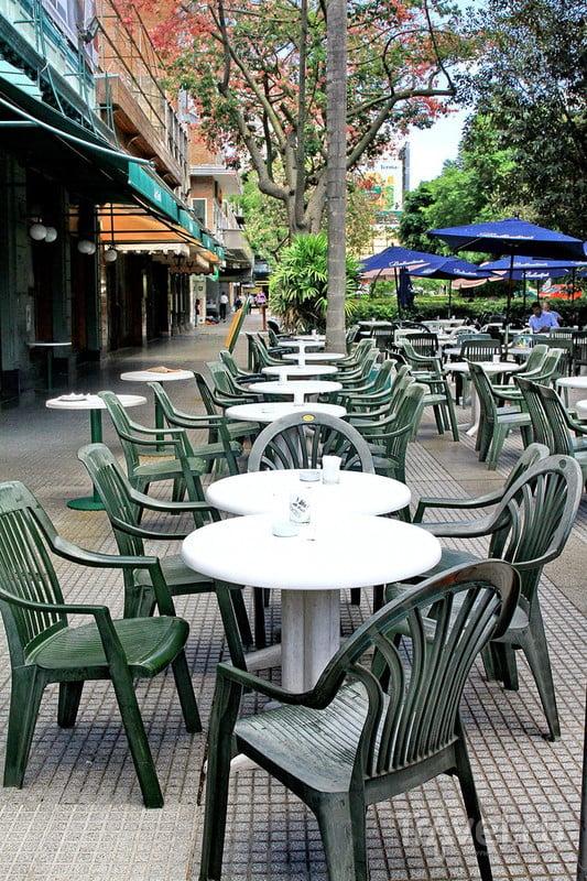Самый большой фикус в Буэнос Айресе / Фото из Аргентины