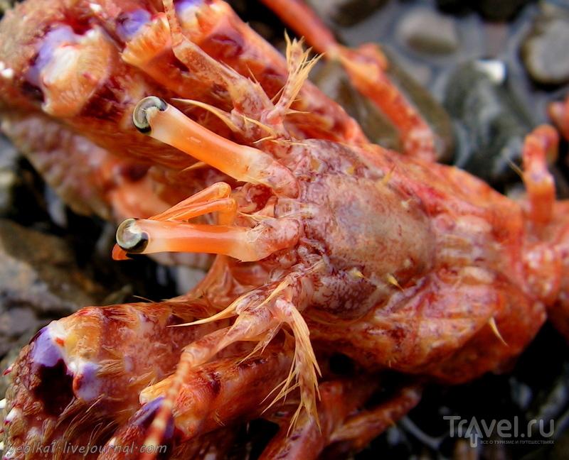 В стране антиподов. И прочие морские кракозябли... / Фото из Новой Зеландии