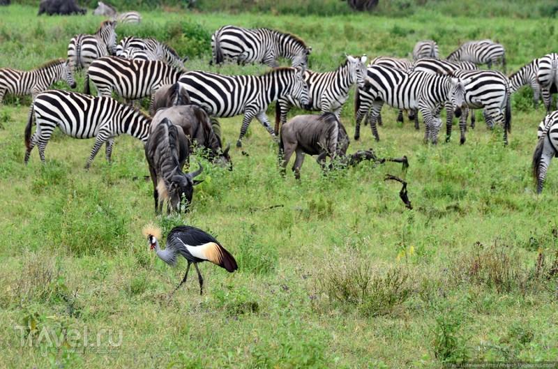 Биосферный заповедник Нгоронгоро (Танзания) / Фото из Танзании