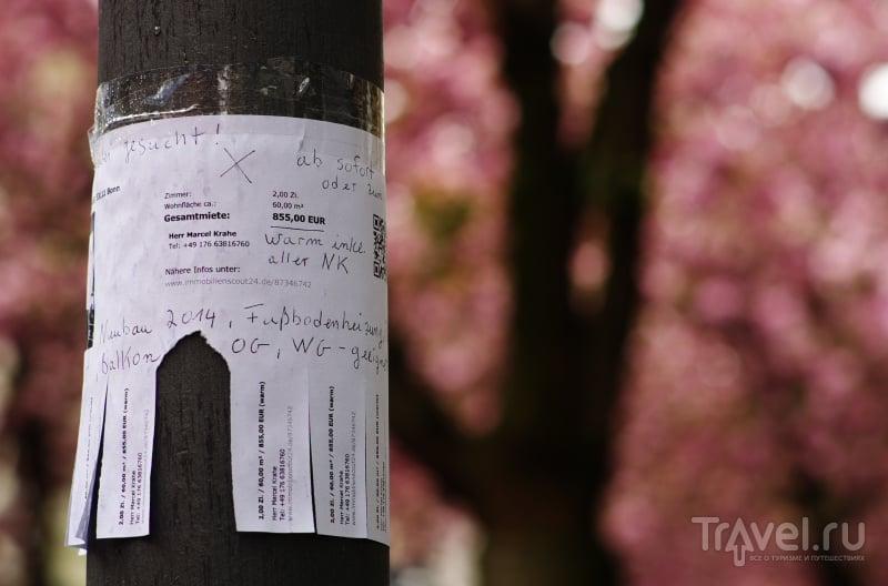 Вишня в Бонне / Фото из Германии