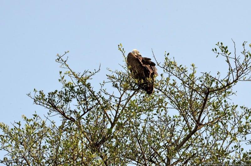 Великая миграция животных в Серенгети (Танзания) / Танзания