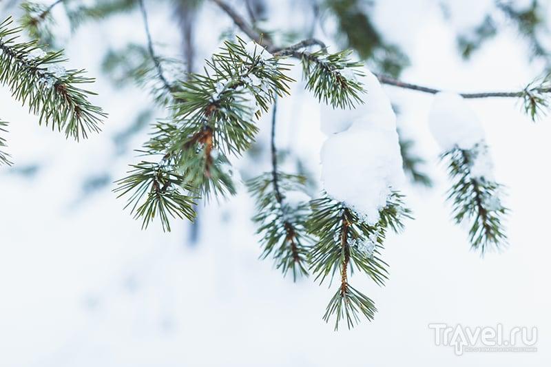 Лапландия зимой - чем заняться и сколько это стоит / Финляндия