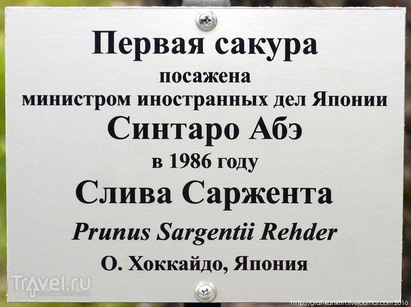 В Москве зацвела... сакура / Фото из России