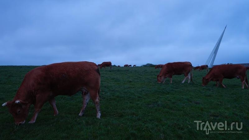 Пост не про коров, не про стелу в честь храбрости лётчиков-первооткрывателей / Франция