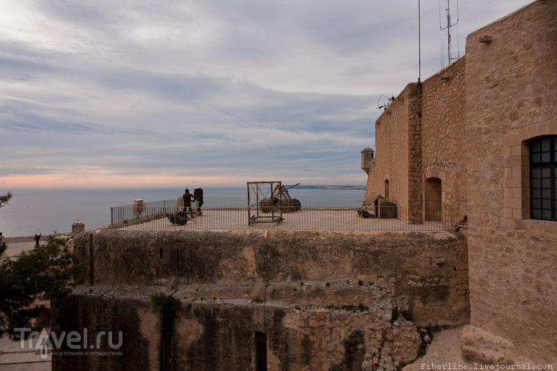Небольшие жабры выросли у жителя замка Санта-Барбара в Аликанте / Испания