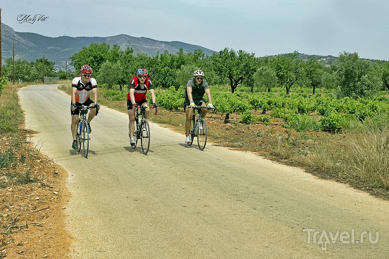 По винодельням восточной Аттики на велосипеде / Греция