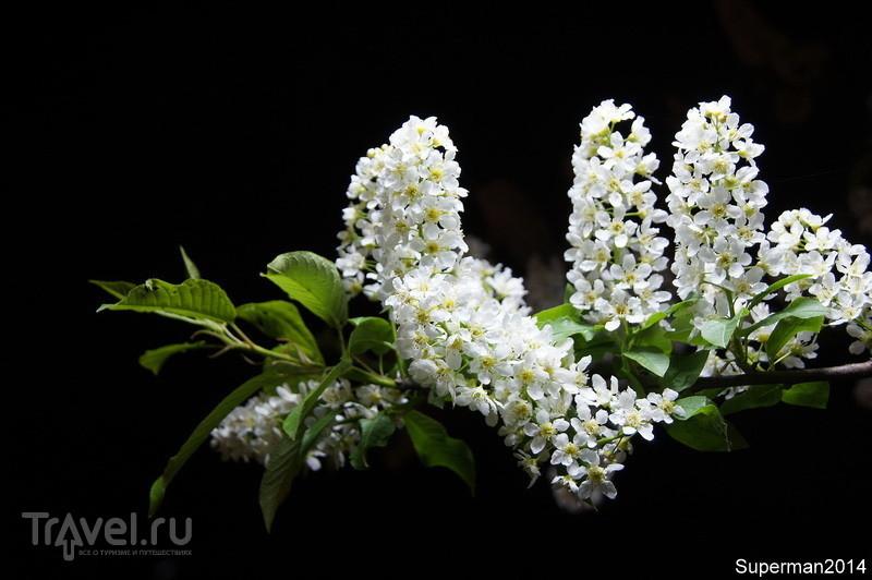 Весной на Кудыкиной горе / Россия