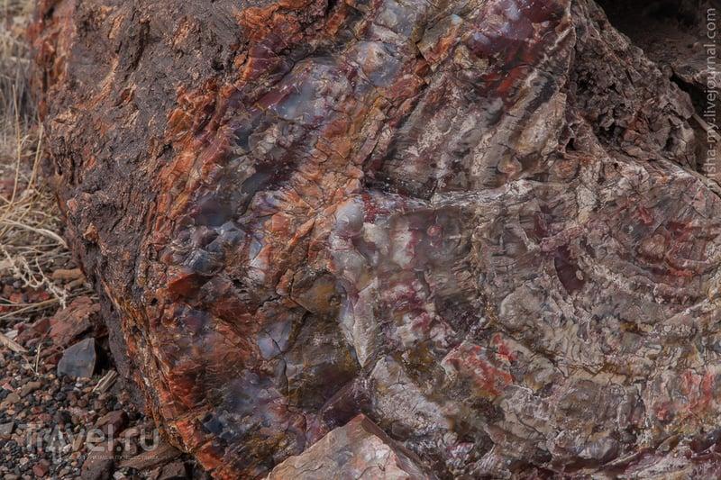 США. Национальный парк Petrified forest / Фото из США