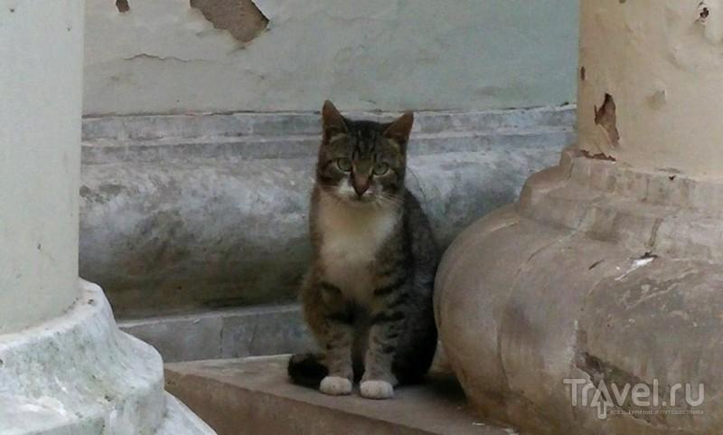 Архангельское - дворец кошек, тортов и заброшенных санаториев / Фото из России