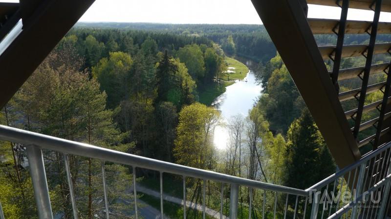 Тропа по верхушкам деревьев в Литве / Литва