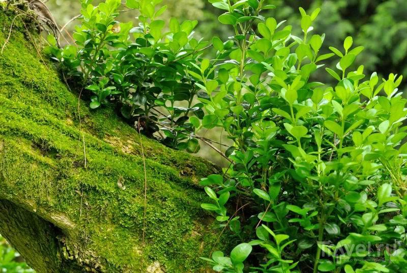 Природа ботанического сада в Сухуме / Россия