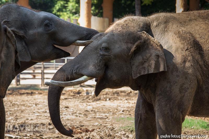 Слоновьи нежности и не только: зоопарк Майсора / Фото из Индии