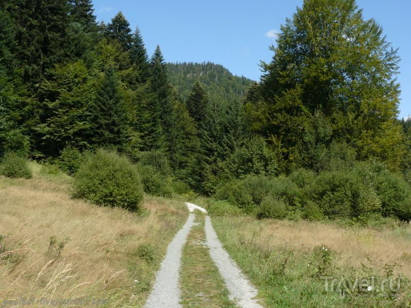 Словения - Хорватия без городов. Где водятся рыси - заповедник Рисняк / Фото из Словении
