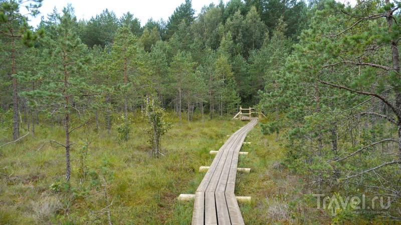 Серные озера в национальном парке Кемери, Латвия / Фото из Латвии