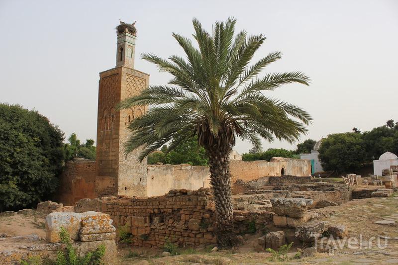 Марокко. Касабланка, Рабат и Фес / Марокко