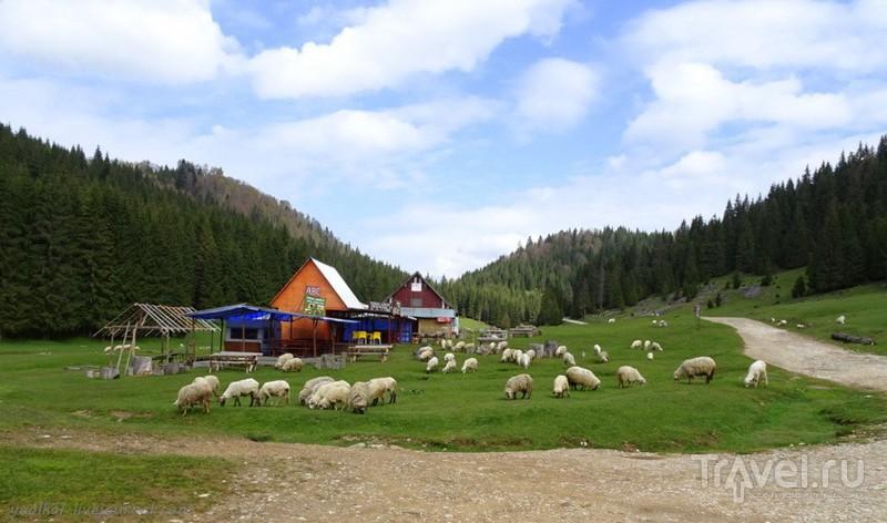 Весна в Апусени. К карстовому замку Понорулуй (Cetăţile Ponorului) / Фото из Румынии