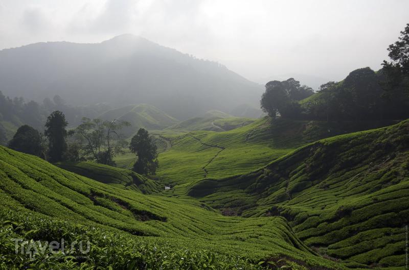 Камеронские высоты (Cаmeron Highlands) / Фото из Малайзии