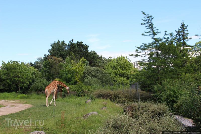 Лионский зоопарк / Фото из Франции