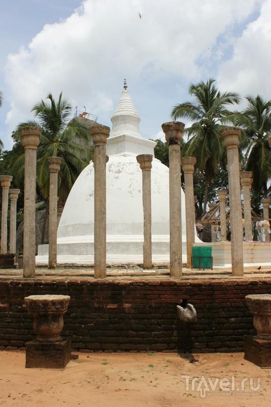 Шри-Ланка: чай, слоны и многое другое / Фото со Шри-Ланки