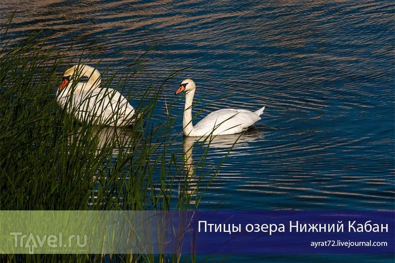Птицы озера Нижний Кабан / Россия