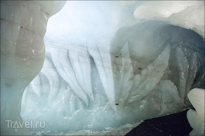 Страшные обитатели альпийских ледников / Фото из Франции
