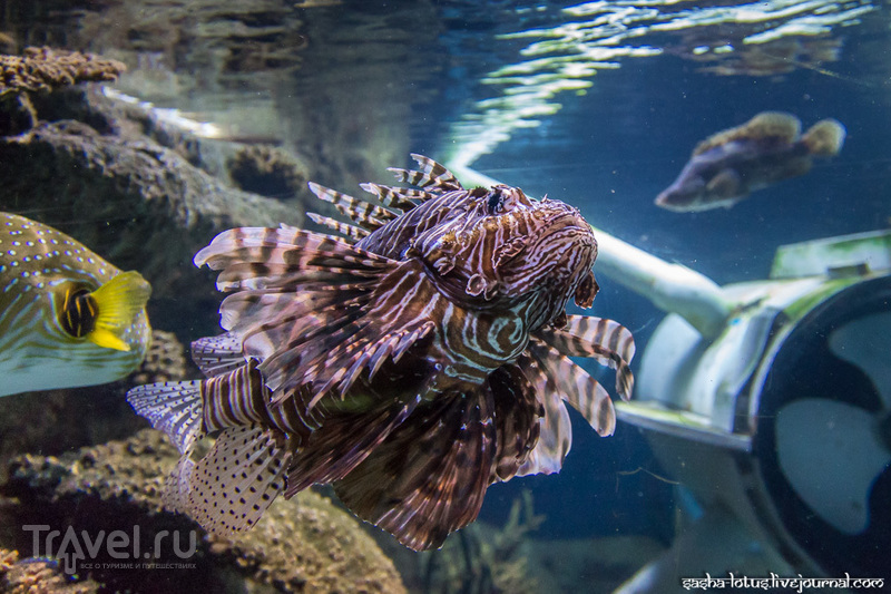 Океанариум Стамбула / Фото из Турции