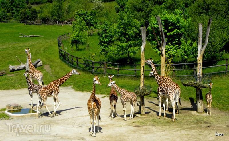 Прага. Зоопарк / Фото из Чехии