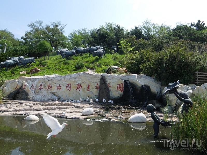 Далянь - на сопках Маньчжурии / Фото из Китая