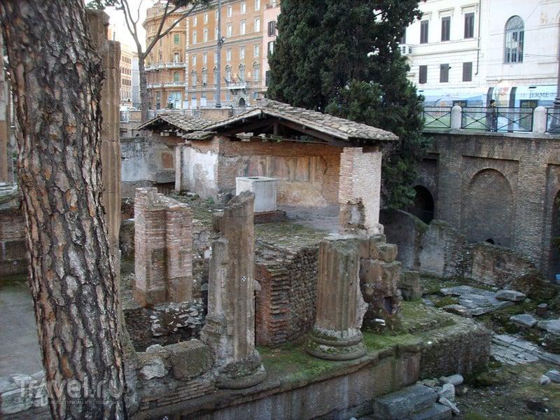 Площадь Торре Арджентина в Риме / Фото из Италии