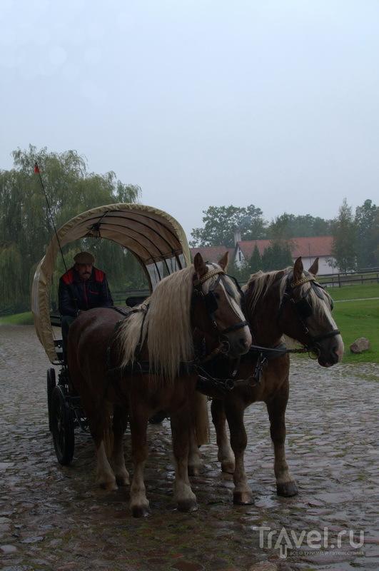 Конные прогулки по территории / Фото из Польши