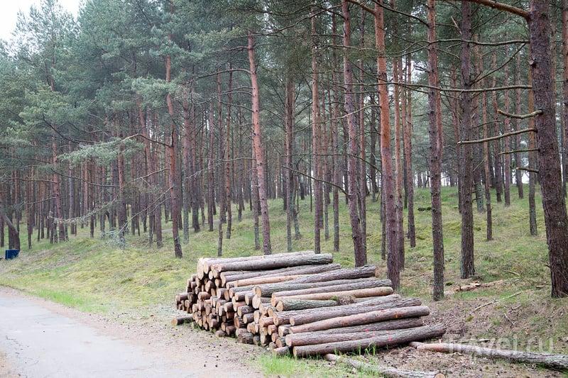 Клайпеда: заповедная зона Смилтене на Куршской косе / Фото из Литвы