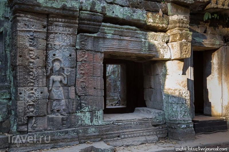 Побыть Ларой Крофт в храме Ta Prohm / Фото из Камбоджи