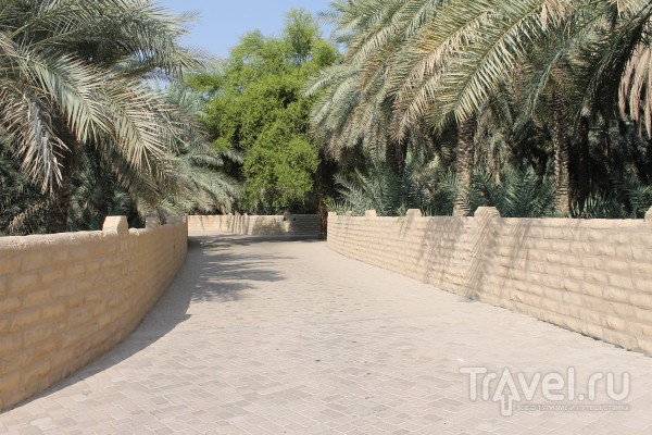 Пять дней в Абу-Даби / ОАЭ