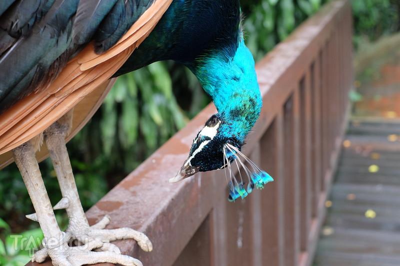 Парк  птиц в Куала-Лумпуре / Малайзия