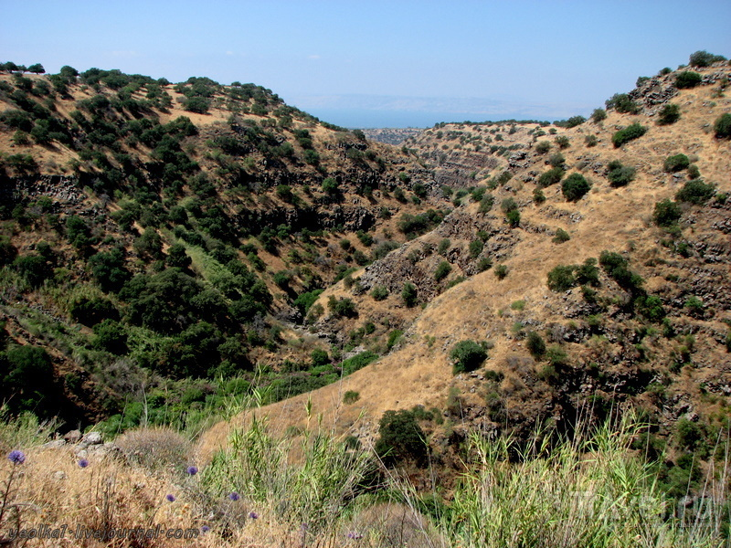 Голанские высоты. Завитан - базальтовое царство. Верхний Завитан / Фото из Израиля