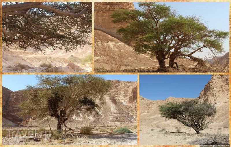 Ущелье  Барак: Здесь начинается Африка / Фото из Израиля