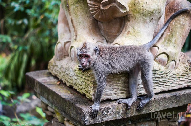 Бали. Лес обезьян / Фото из Индонезии